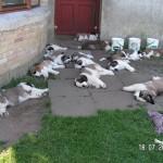 Alle hvalpe trætte efter leg i haven