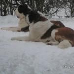 Coco og Wingo