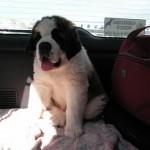 Coco på vej hjem fra schweiz
